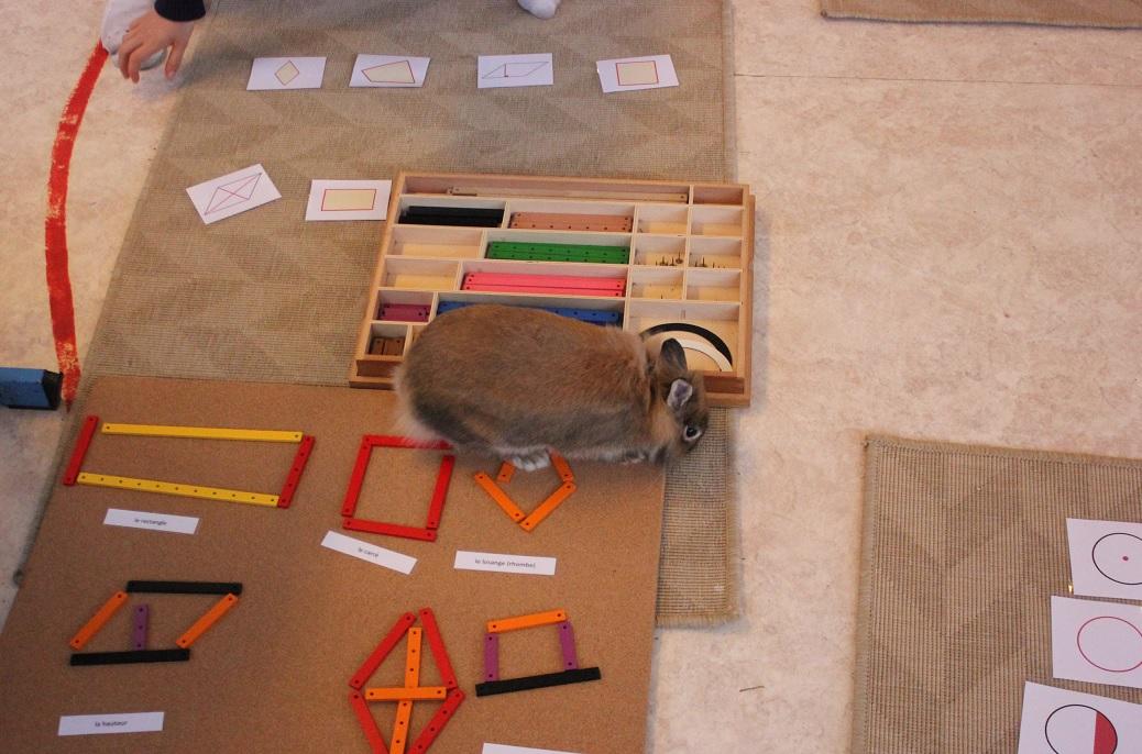 Montessori les animaux