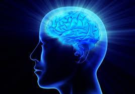 Montessori cerveau